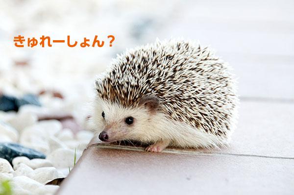 きゅれーしょん?