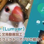 ルミヤー(Lumyer)で髪なびく文鳥動画加工!ビデオ・エフェクト・アプリご紹介